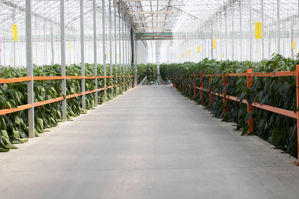 Mucci Farms Opens Greenhouse Facility