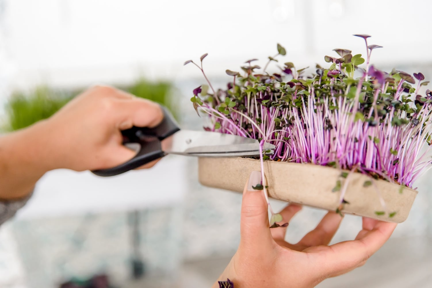 Back to the Roots Launches Organic Microgreens Grow Kit