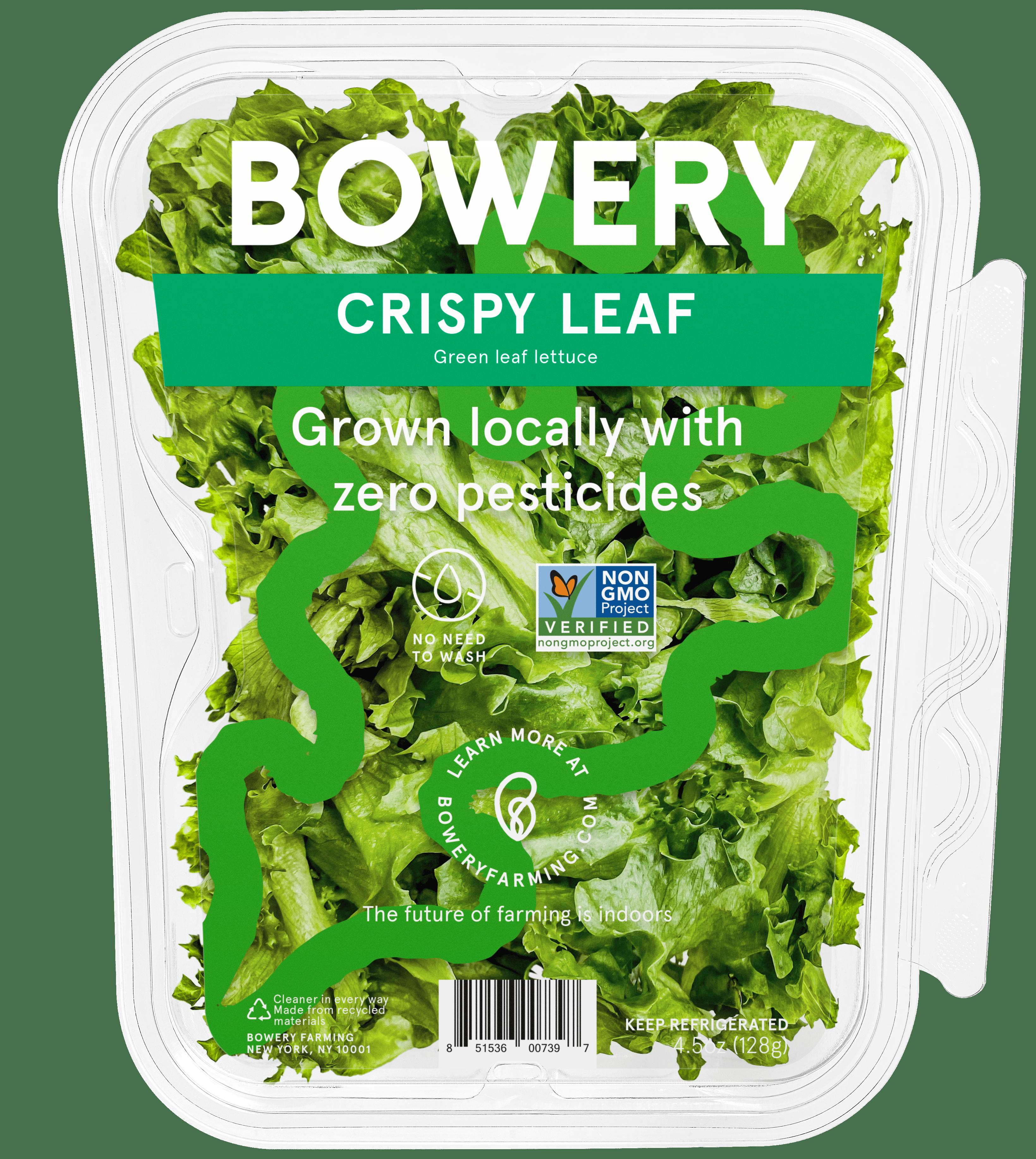 Bowery Farming Introduces Crispy Leaf Lettuce
